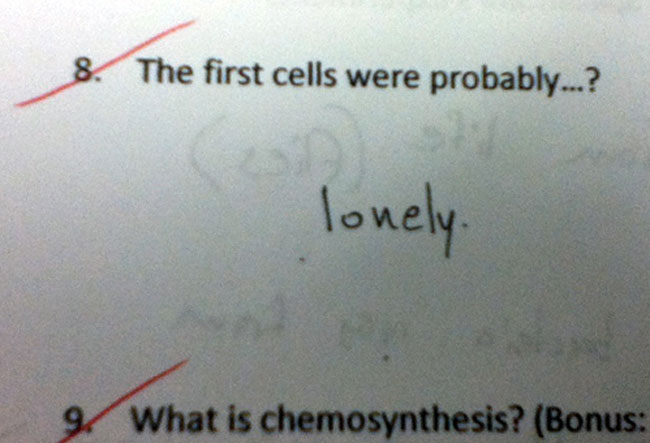 wrong but funny test answers 17